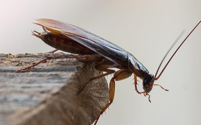 cockroach on edge of table