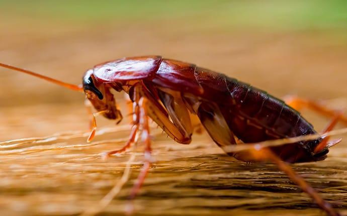cockroach on broom