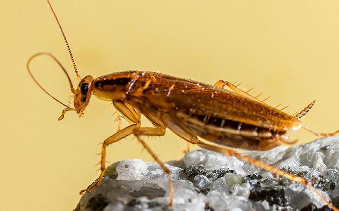 cockroah up close