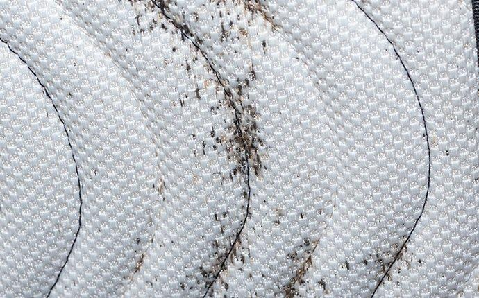 a mattress with evidence of a bed bug infestation in granger washington
