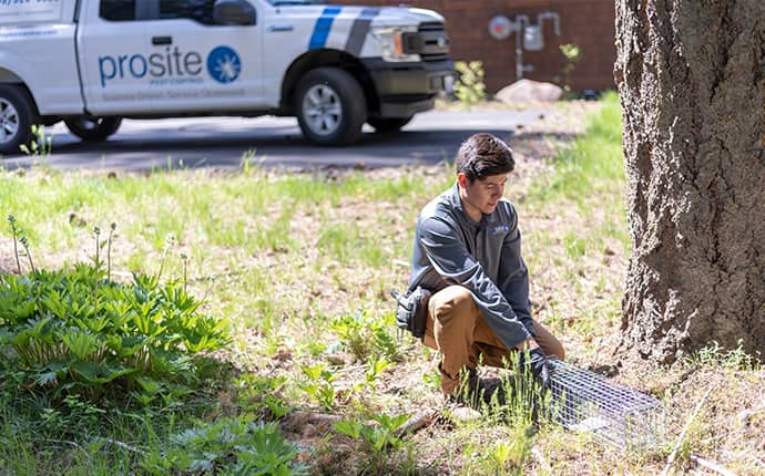 a prosite pest control service expert performing pest exclusion services outside of a home in central washington
