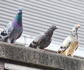 birds perched on yakima county business
