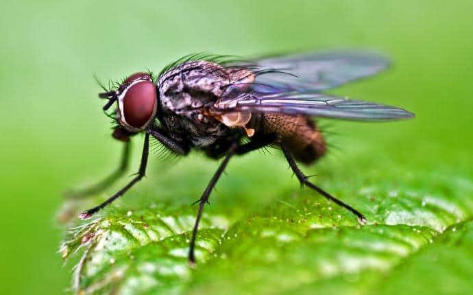 house fly in selah washington