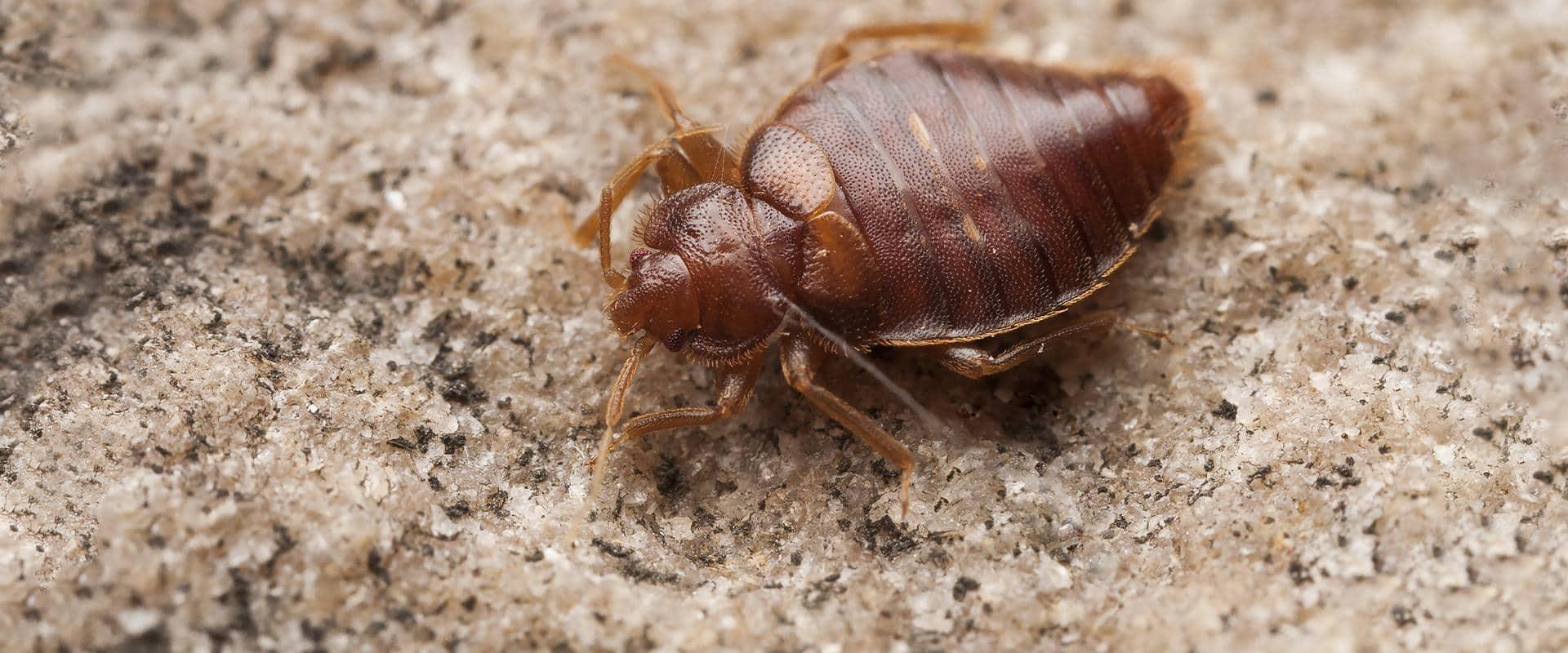 bed bug in cle elum washington