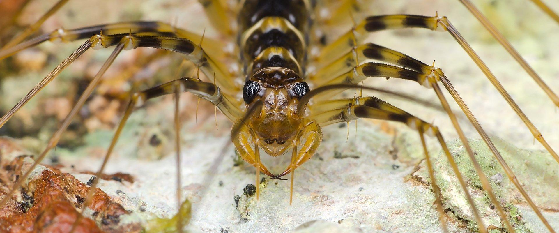 centipede outside