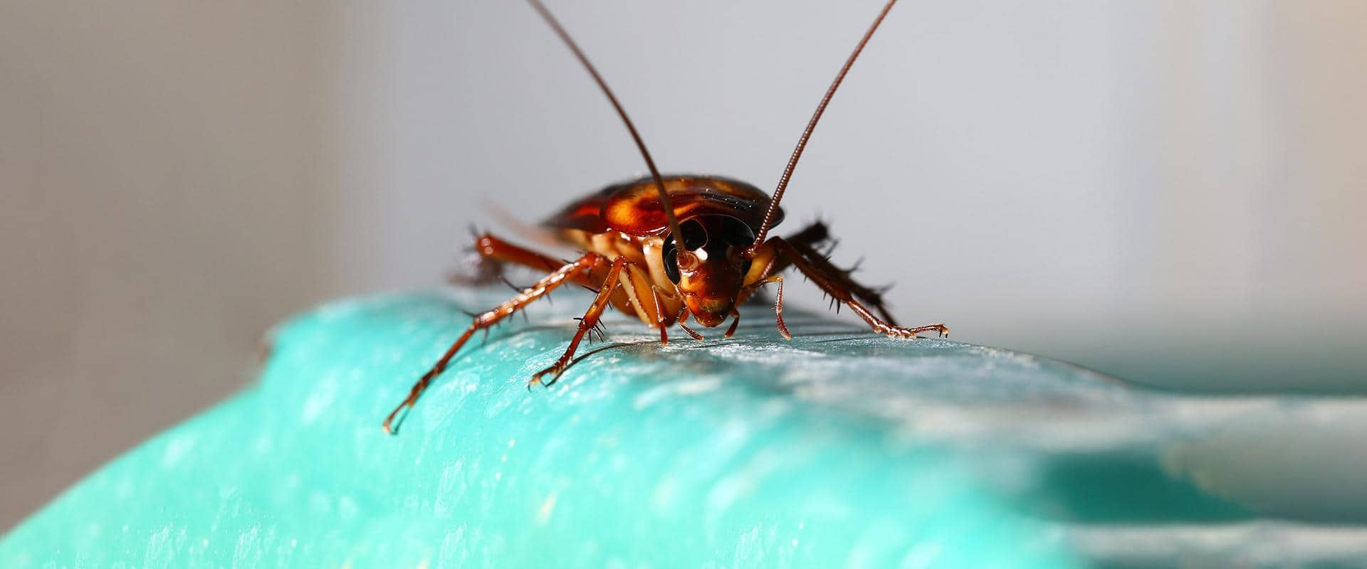 cockroach in yakima wa