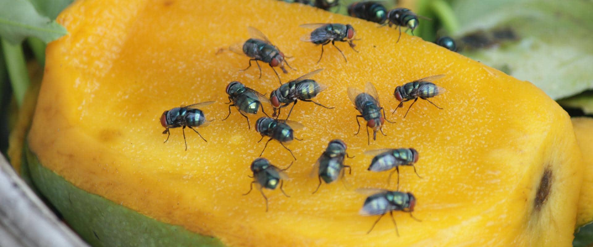 flies on food in cle elum washington