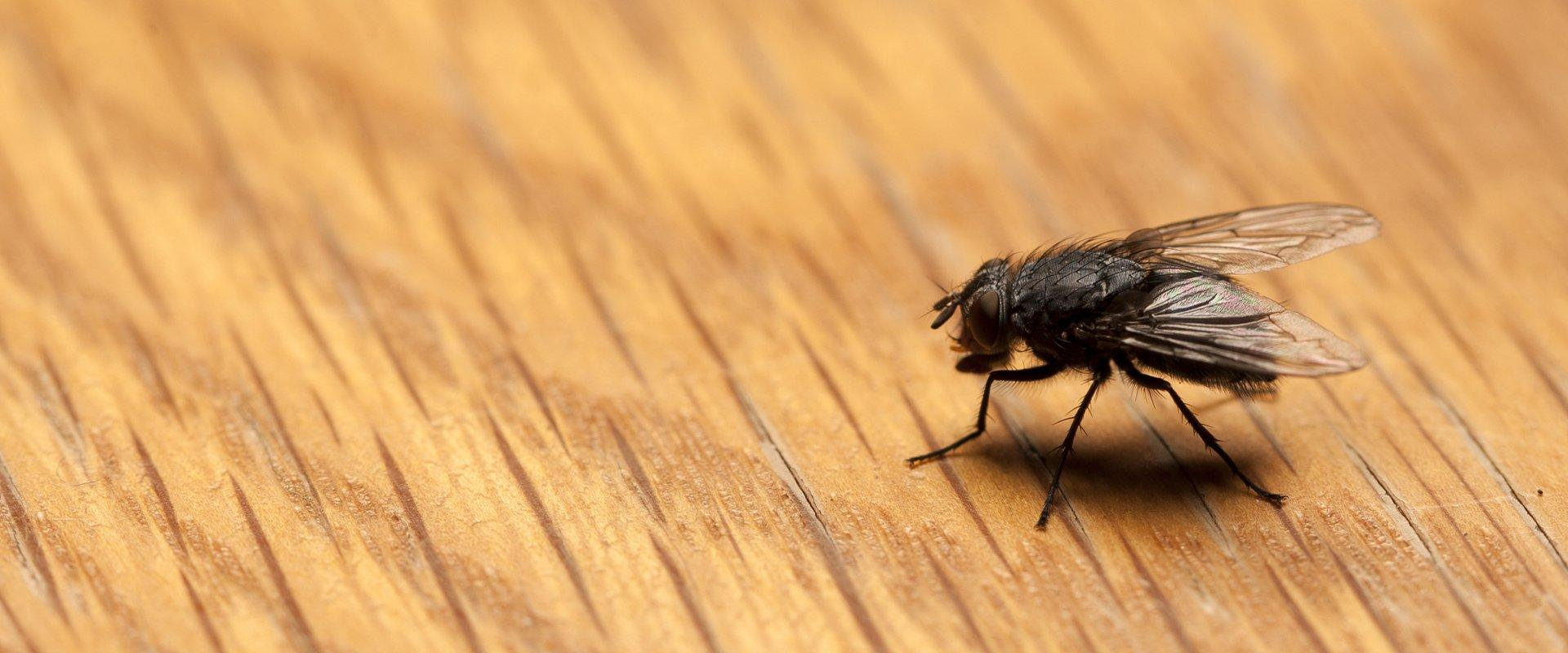 house fly on deck