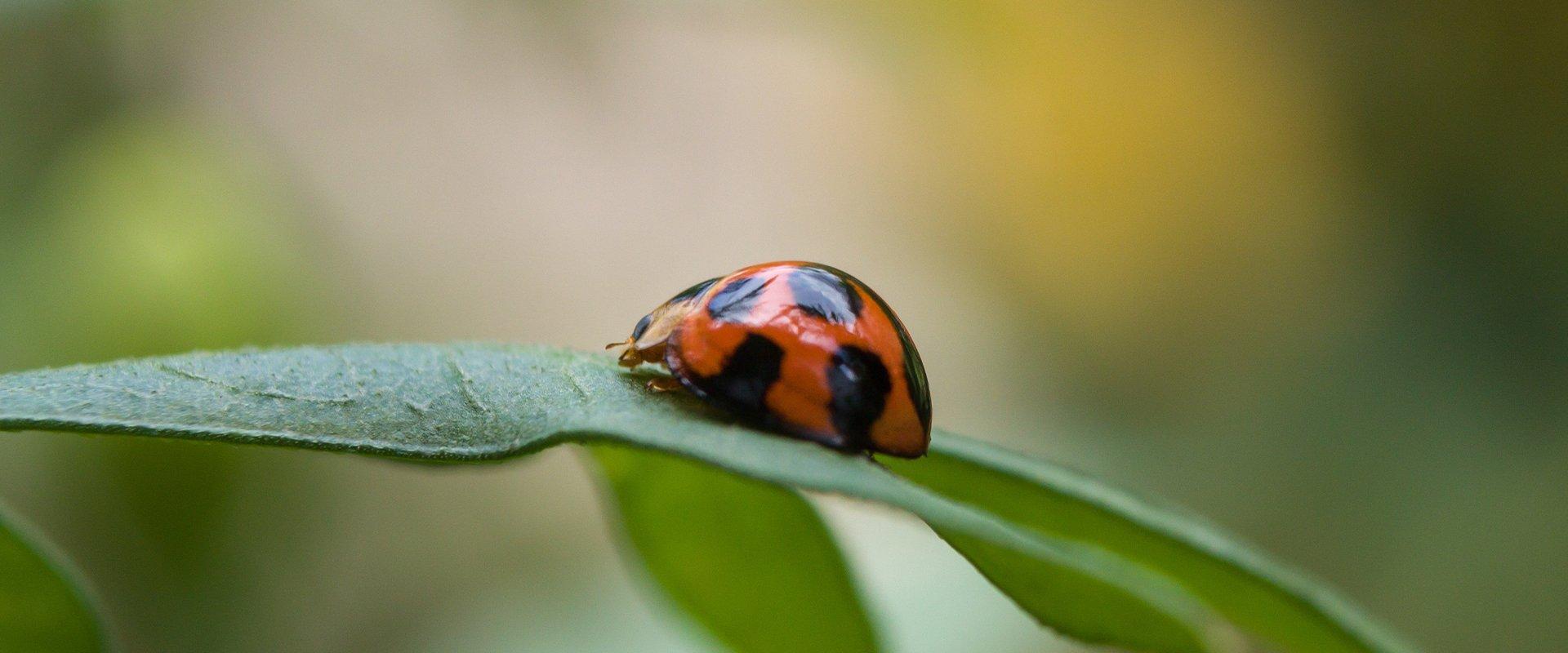 lady beetle on plant