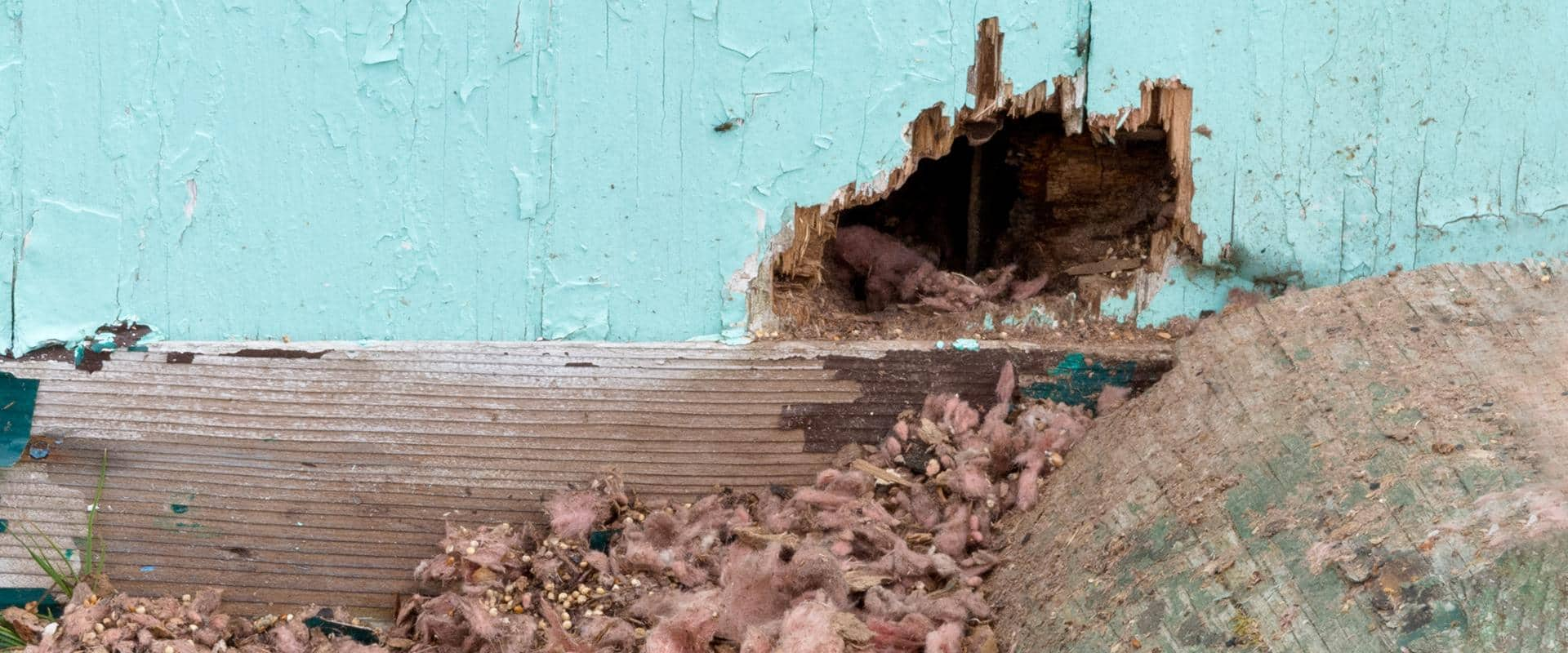 hole in washington home that mice enter