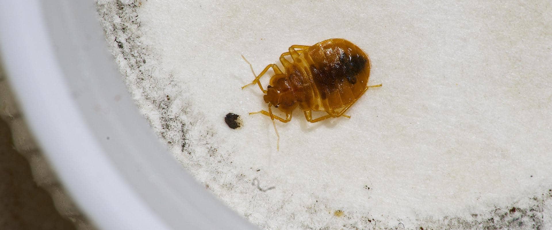 bed bug in ellensburg wa home
