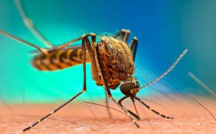 a mosquito biting skin in gleed