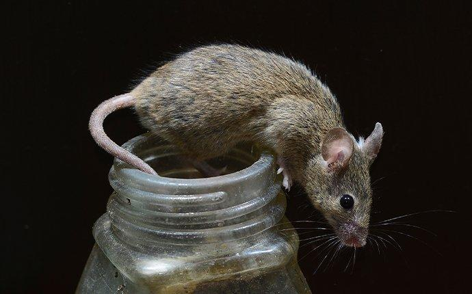 mouse crawling on top of a jar