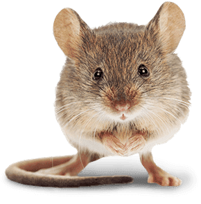a mouse in toppenish washington