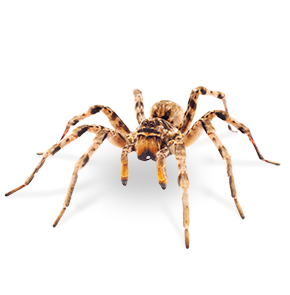 spider in sunnyside washington