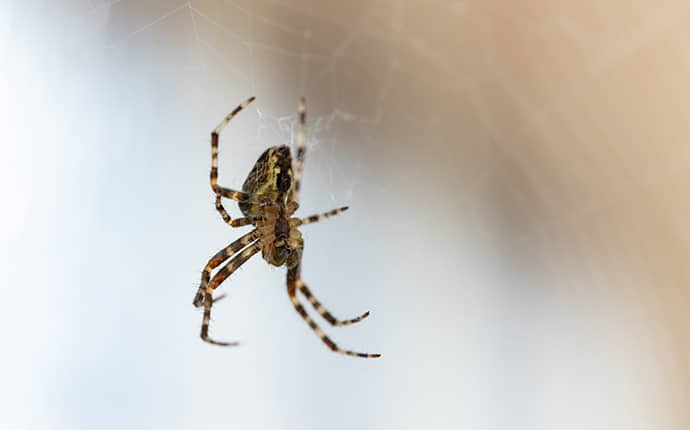 spider on a web outside a sunnyside washington home
