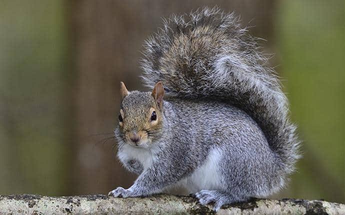 squirrel in a washington back yard