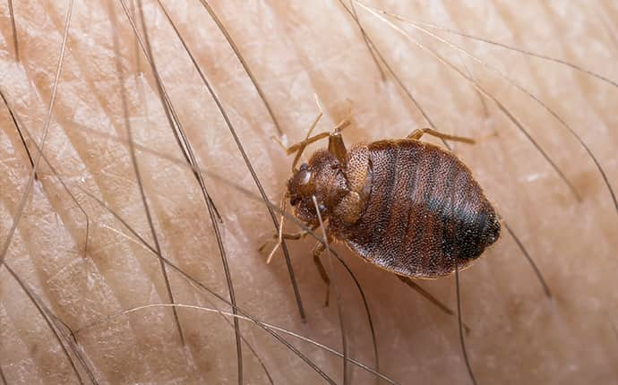 bed bug crawling on a human inside of a home in sunnyside washington