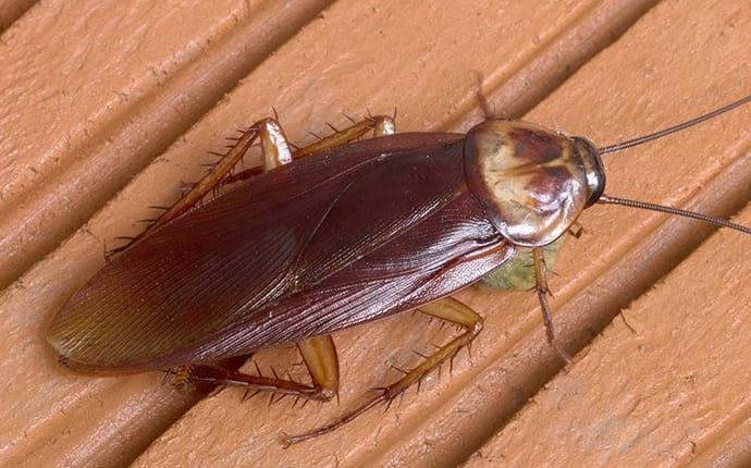 a cockroach inside a home in terrace heights washington