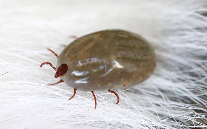 tick on a household pet