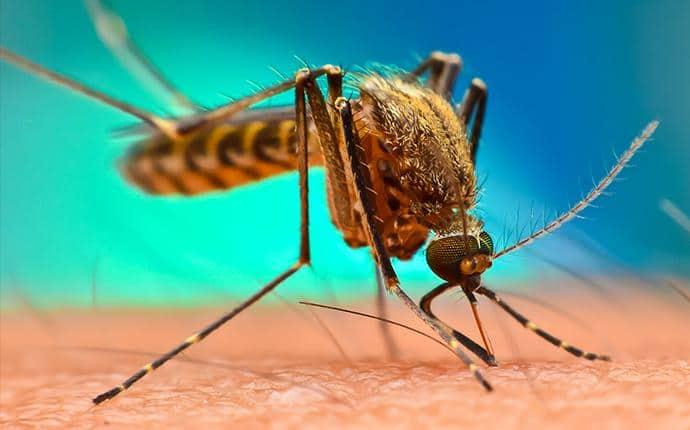 western encephalitis mosquito lake cle elum wa