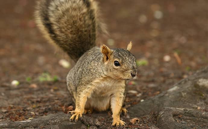squirrel in yakima indian nation wa