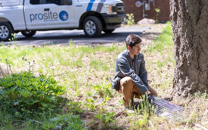 a prosite pest control service expert setting up a wildlife exclusion station outside of a home in central washington