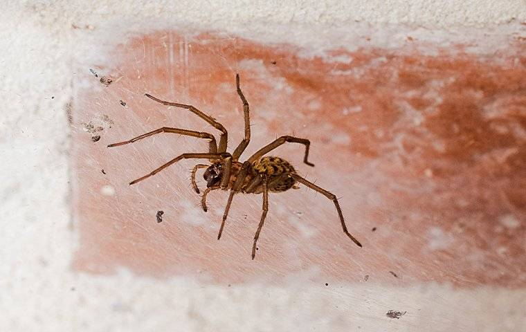 a house spider on a brick