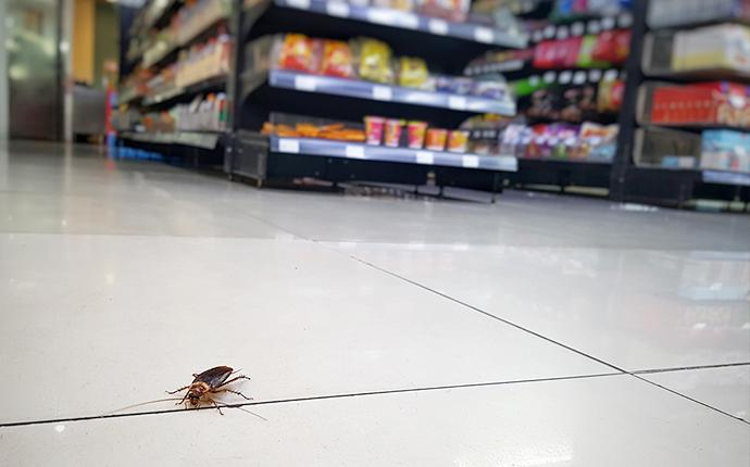 cockroach on grocery store floor