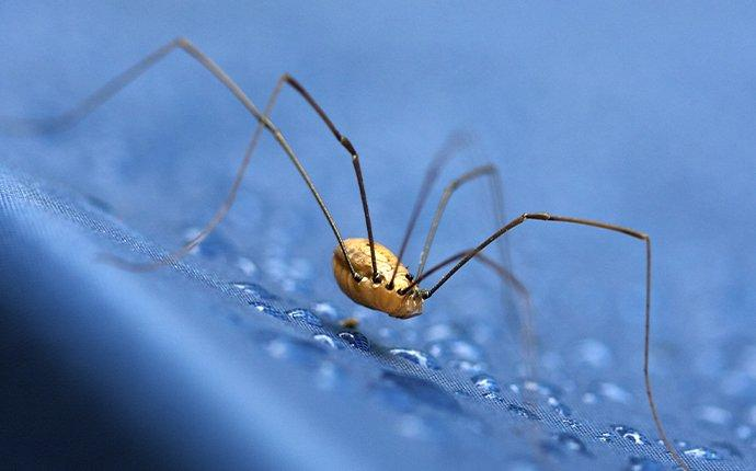 a daddy long legs spider crawling on fabric