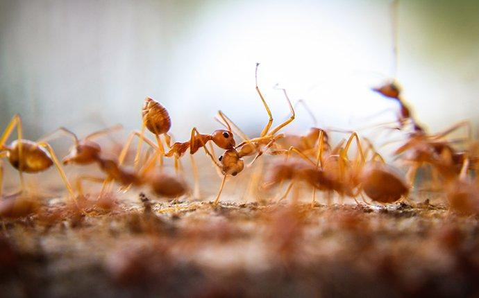 fire ants crawling on dirt in a a yard