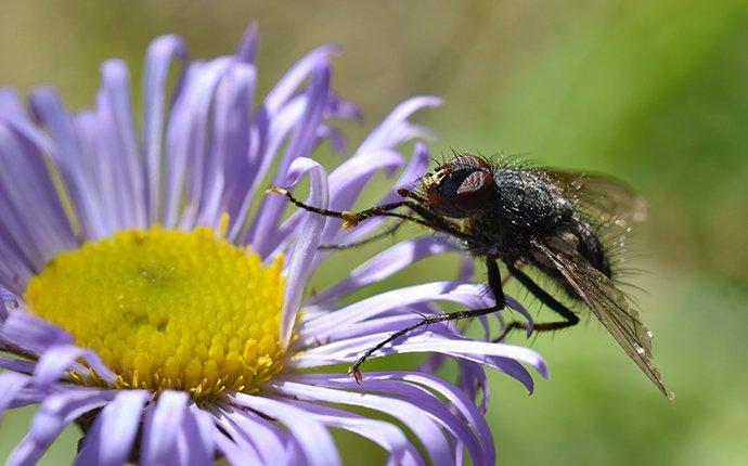 a house fly on a flower in spring