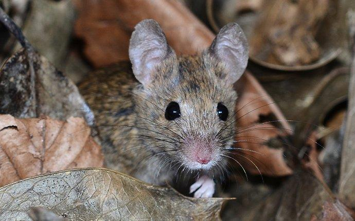 a mouse hiding in leaves
