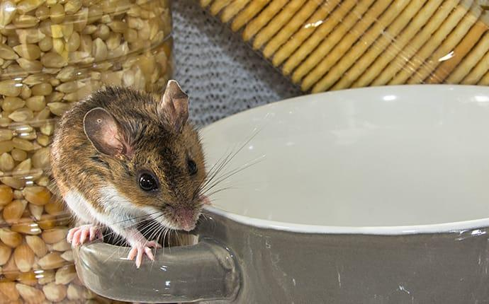a field mouse infesting a moble alabama recreational vehicle during early winter