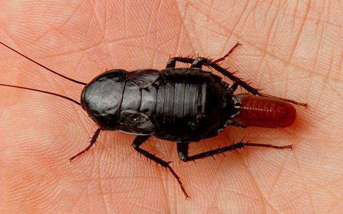 a cockroach on a human hand