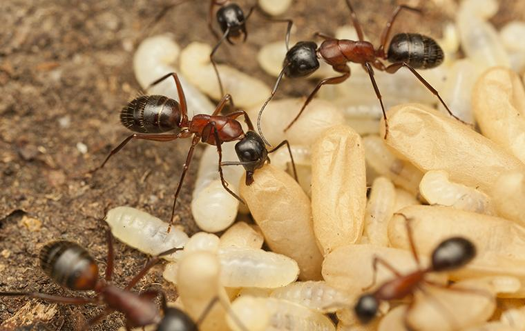 ants crawling on ground in hattiesburg ms