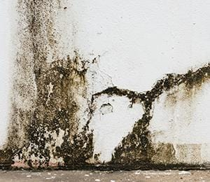 black mold on the interior wall of a mississippi residence