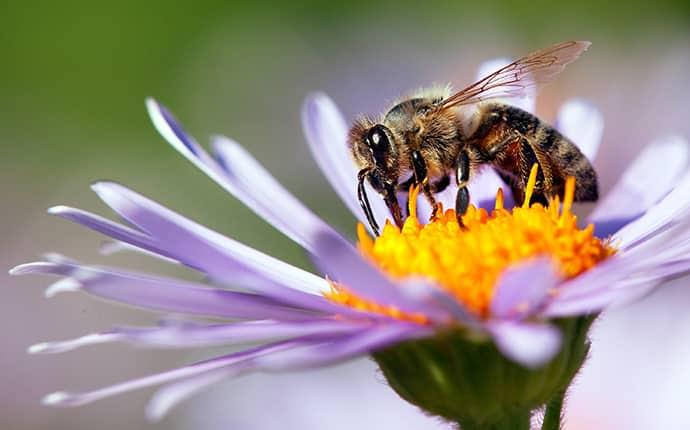 honey bee on a purple flower in a birmingham alabama yard