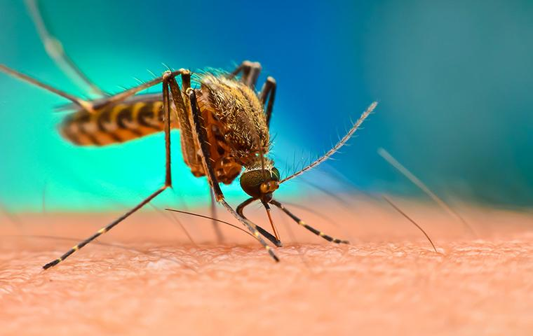 a mosquito biting the arm of a mississippi resident