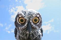 owl cafe in japan not utilizing bird management