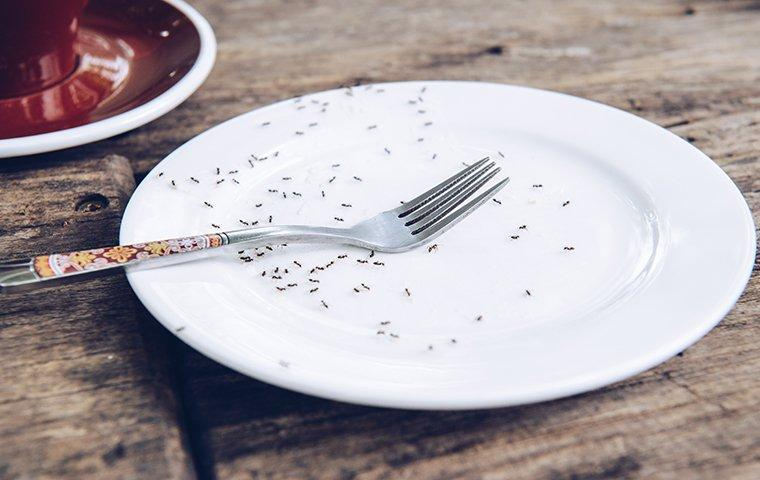 ants infesting a spring plated picnic