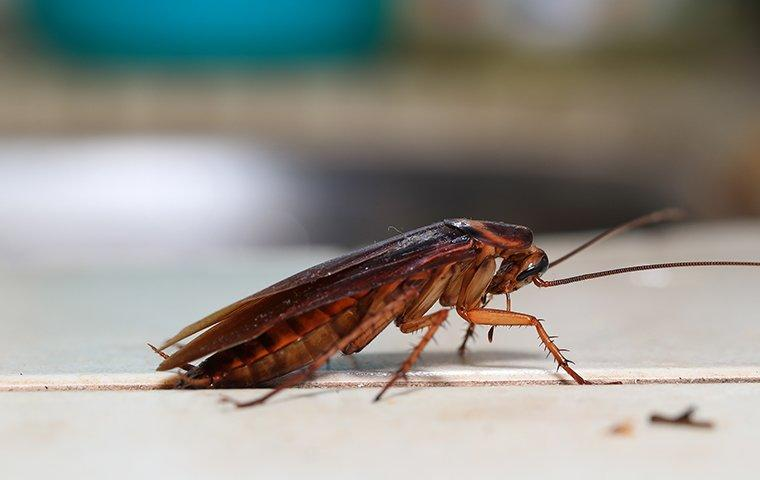 cockroach found in lewisville home