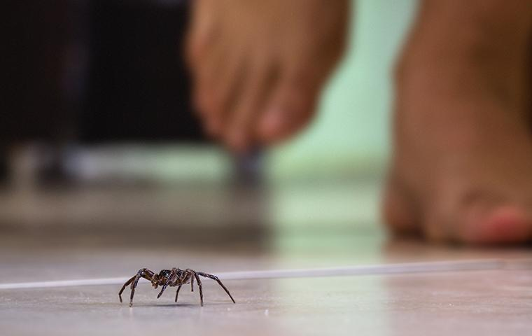 spider crawling on a kitchen floor in front of a person walking