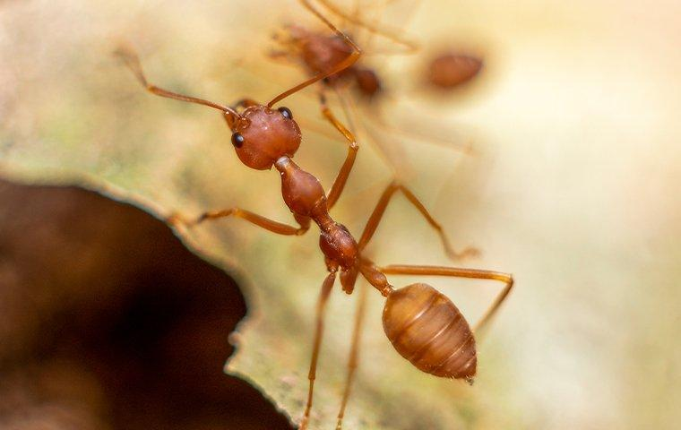 fire ants crawling on ground