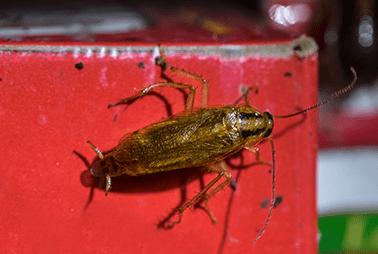 cockroach in restaurant