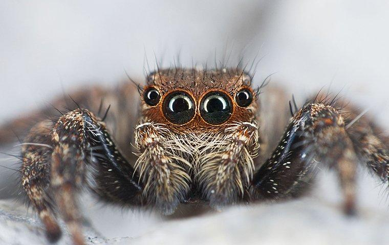 jumping spider in basement