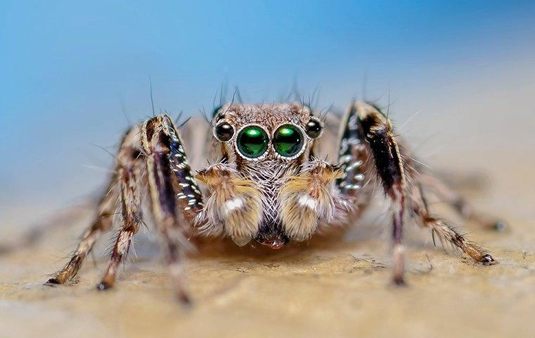 a jumping spider in a denton tx home