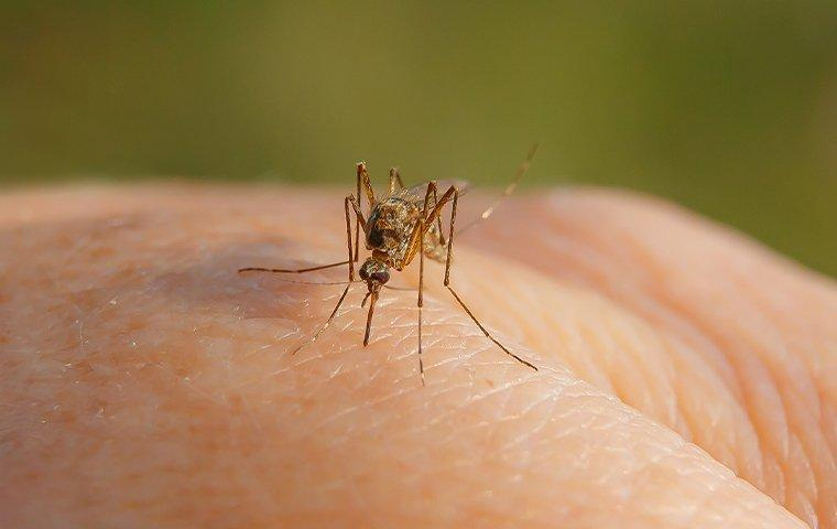 a mosquito biting a hand