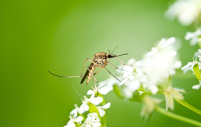 a mosquito landing on flowers