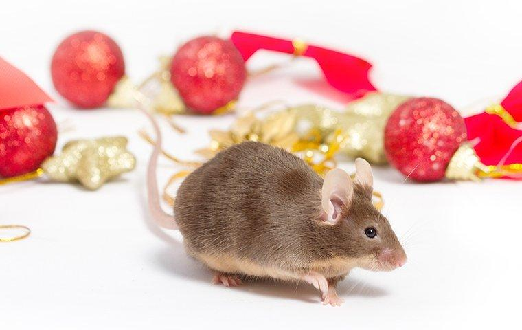 mouse on a christmas ornament